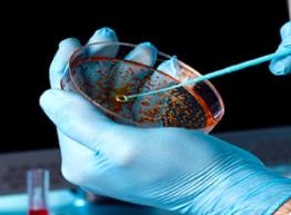 Microbiology-erevna